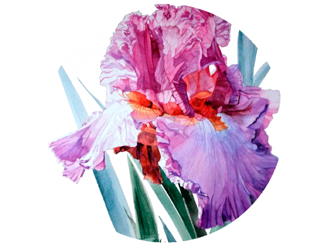 Iris Luciano Pavarotti the artwork factory