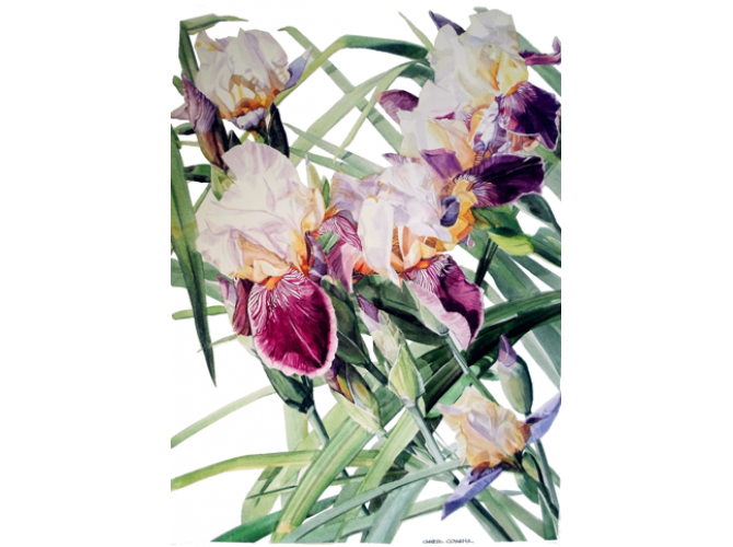 Iris Vivaldi Spring the artwork factory