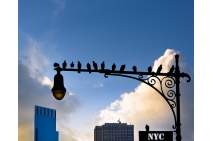 New York City Is For The Birds