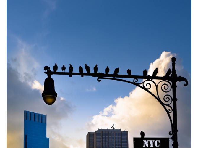 New York City Is For The Birds the artwork factory