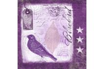 Blue Bird in Lila