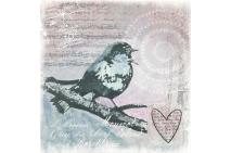 Songbird 66